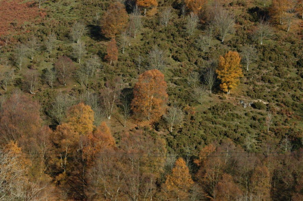 tylwch trees