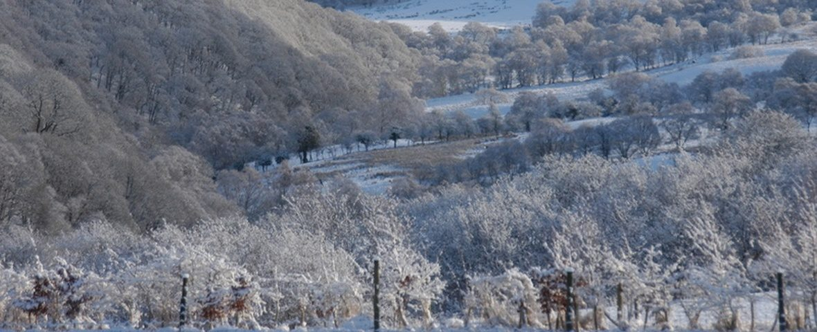 Frost in valley CROP 1