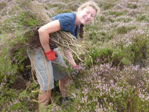 Collecting heather